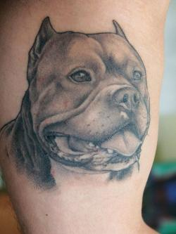 Innocent Pitbull Tattoos